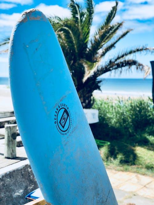 Foto d'estoc gratuïta de enfocament selectiu, taula de surf