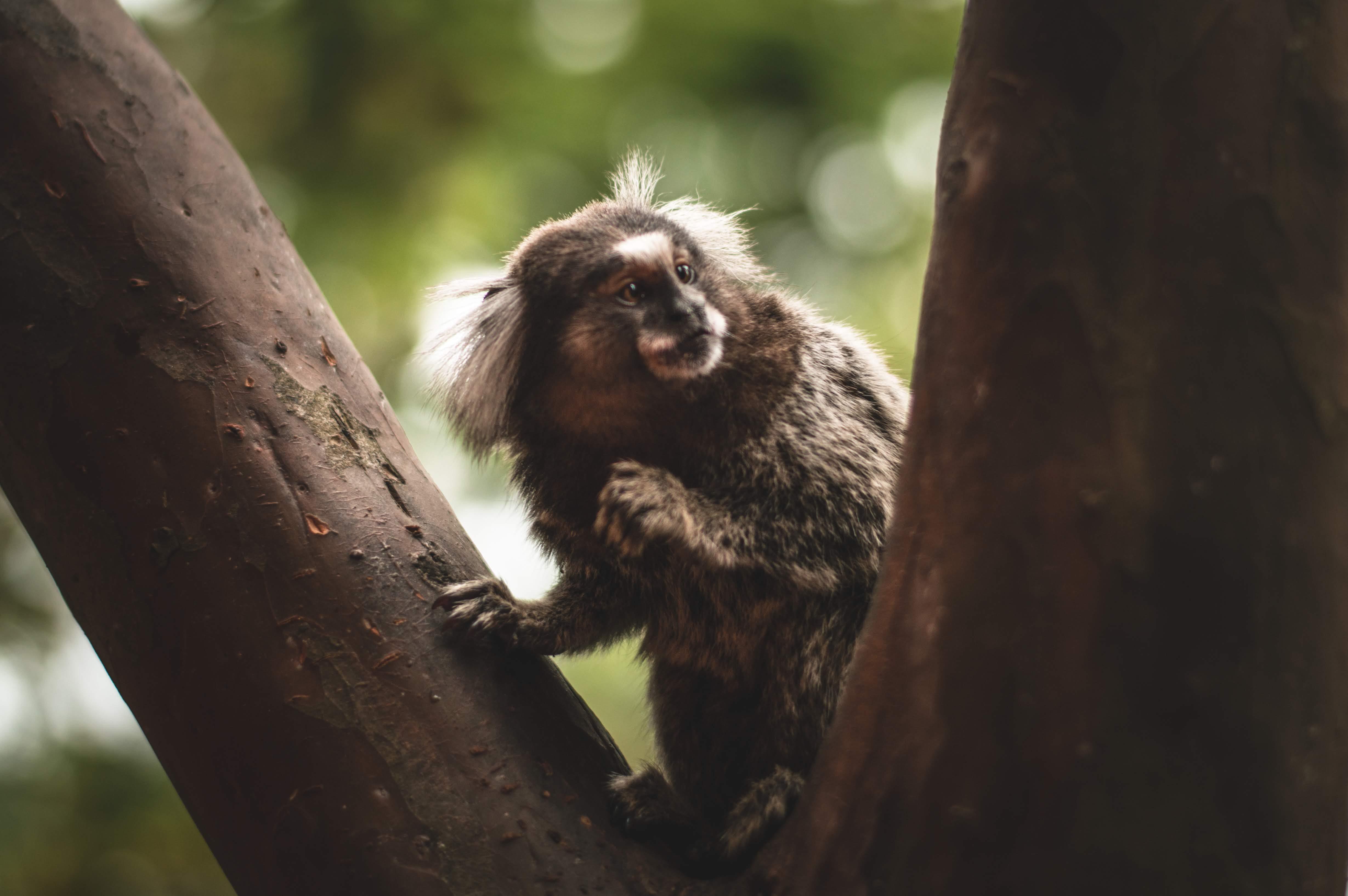 Fotos de stock gratuitas de animal, árbol, fauna, fotografía de animales