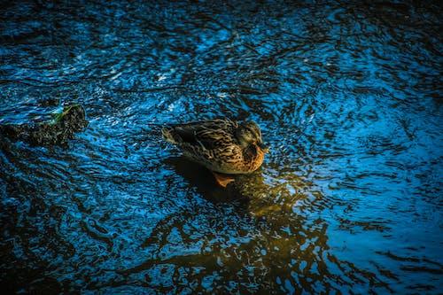 Darmowe zdjęcie z galerii z natura, woda
