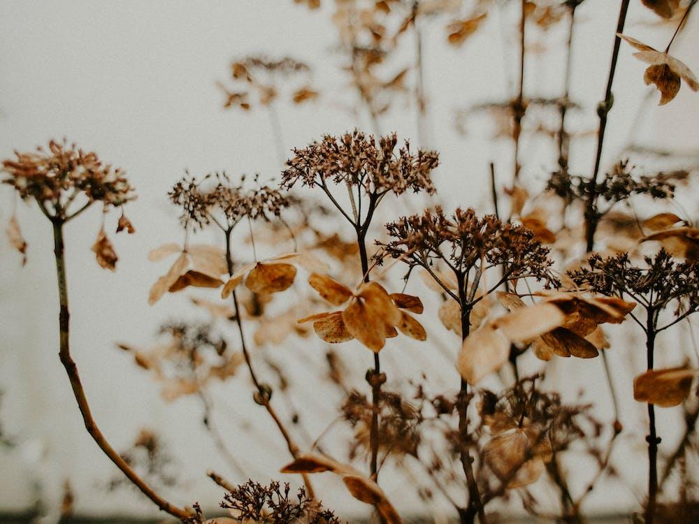 blomster, brun, delikat