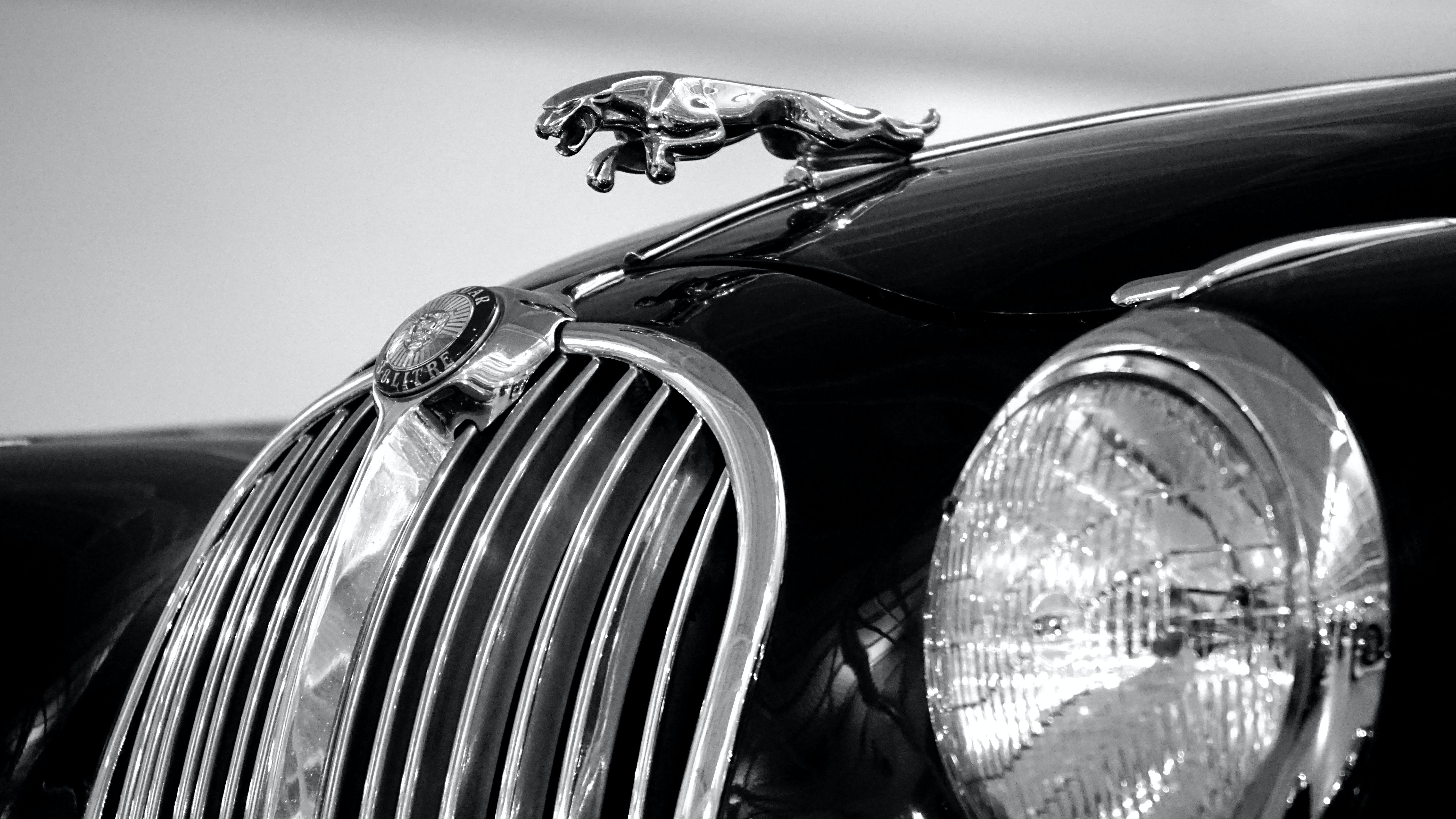 Jaguar Emblem on Black Car
