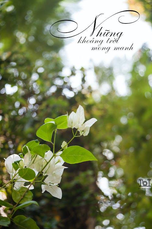 Immagine gratuita di bel fiore, fiore, giorno