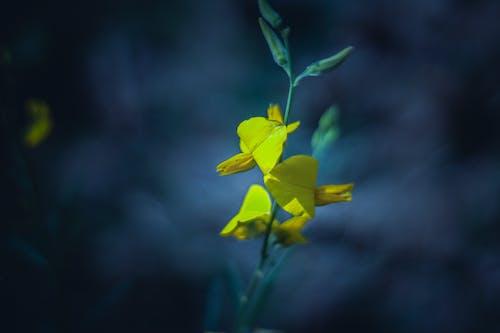 Fotos de stock gratuitas de amarillo, amarillo dorado, azul, flor
