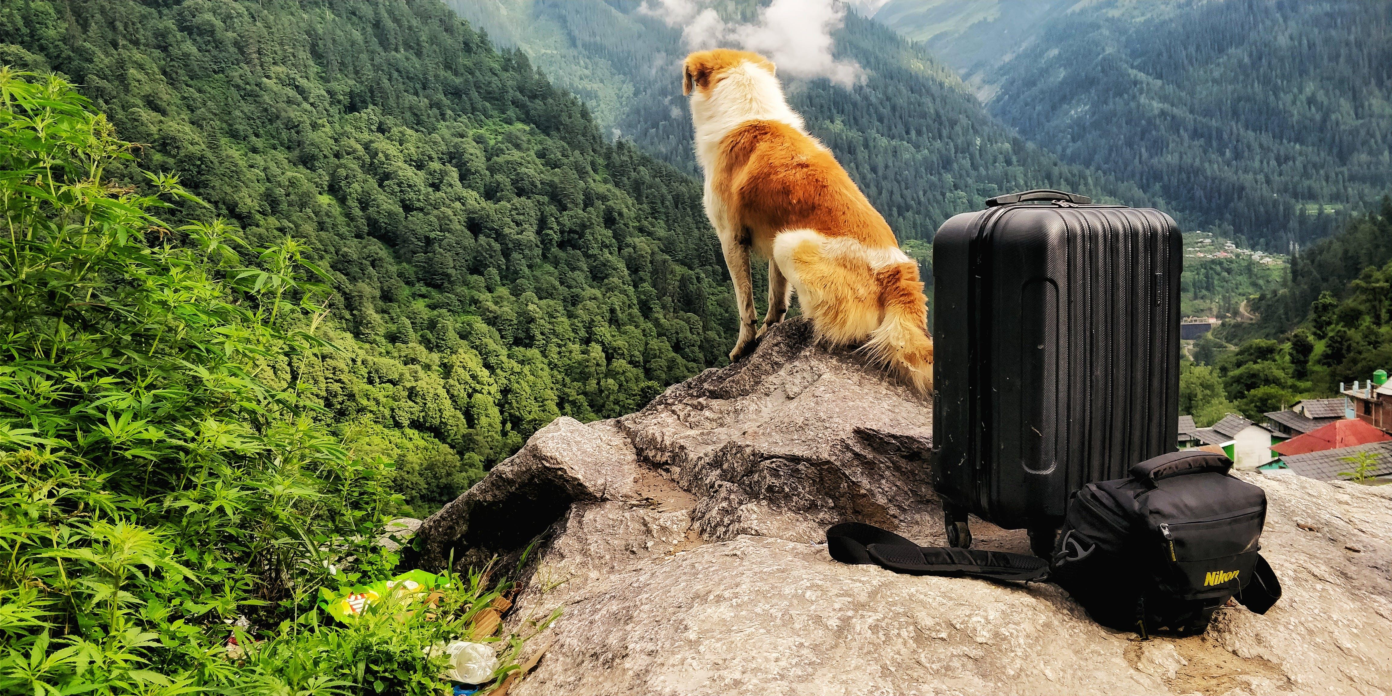 Free stock photo of baby dog, bernese mountain dog, dog, dog collar