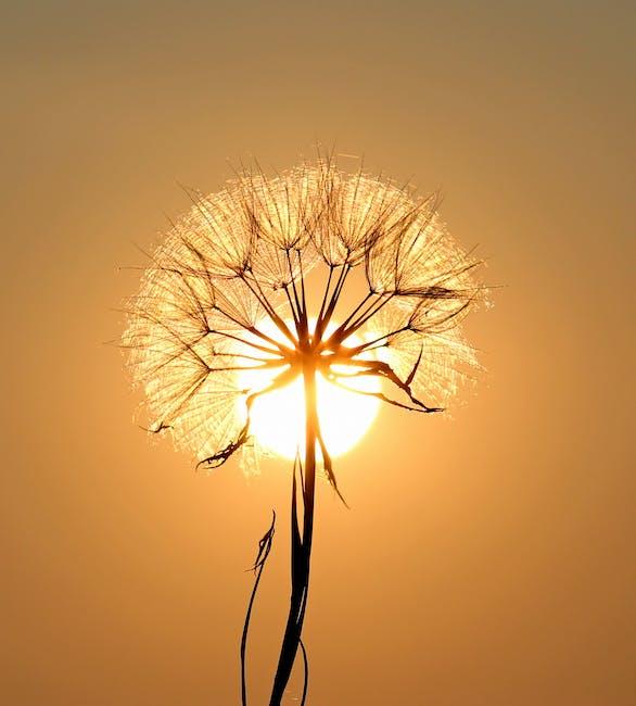 New free stock photo of light, dawn, sunset