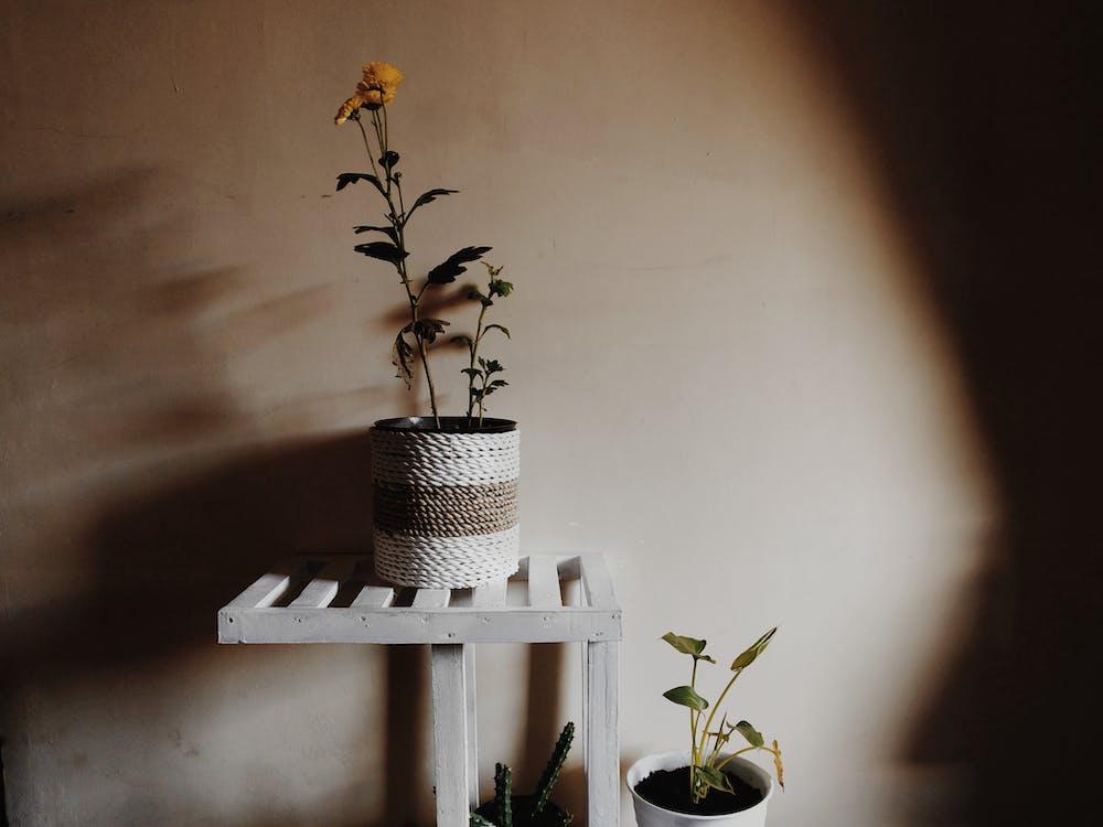 cassola, creixement, delicat