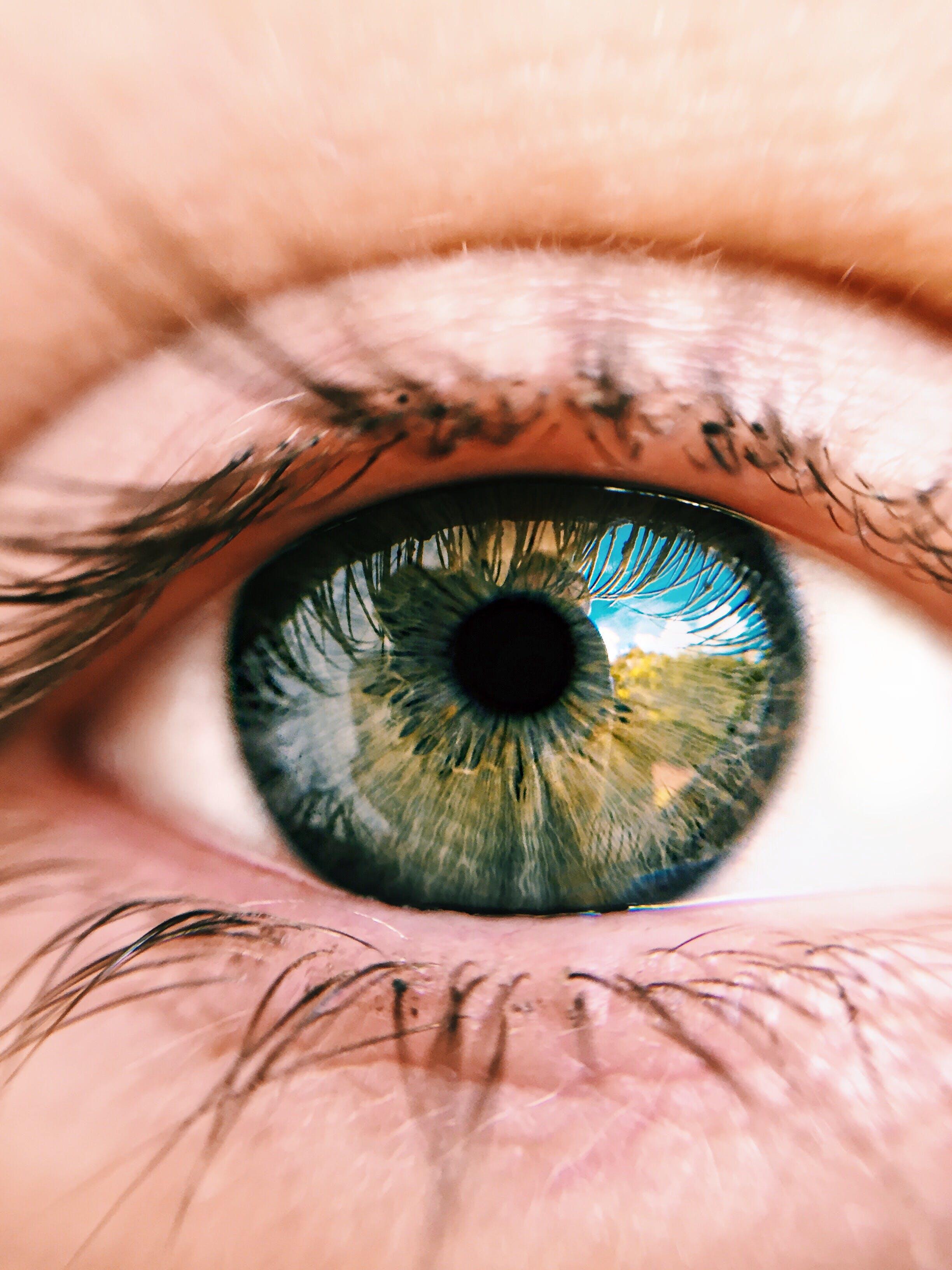 Immagine gratuita di allievo, bulbo oculare, ciglia, cornea