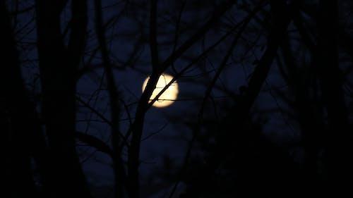 Ảnh lưu trữ miễn phí về bóng tối, cây, chụp ảnh ngoài trời, mặt trăng