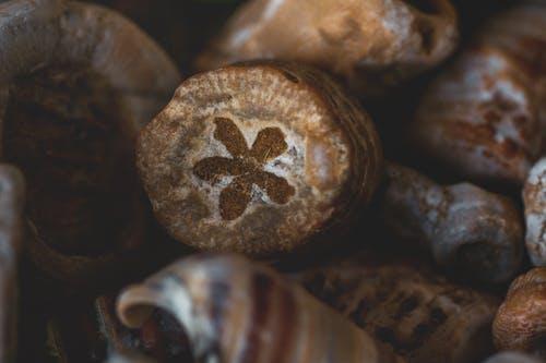 Darmowe zdjęcie z galerii z fotografia makro, kwiat, makro, skamieniałości
