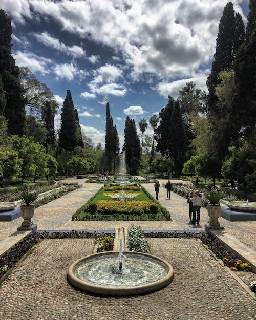 摩洛哥, 花園, 菲斯 的 免费素材照片