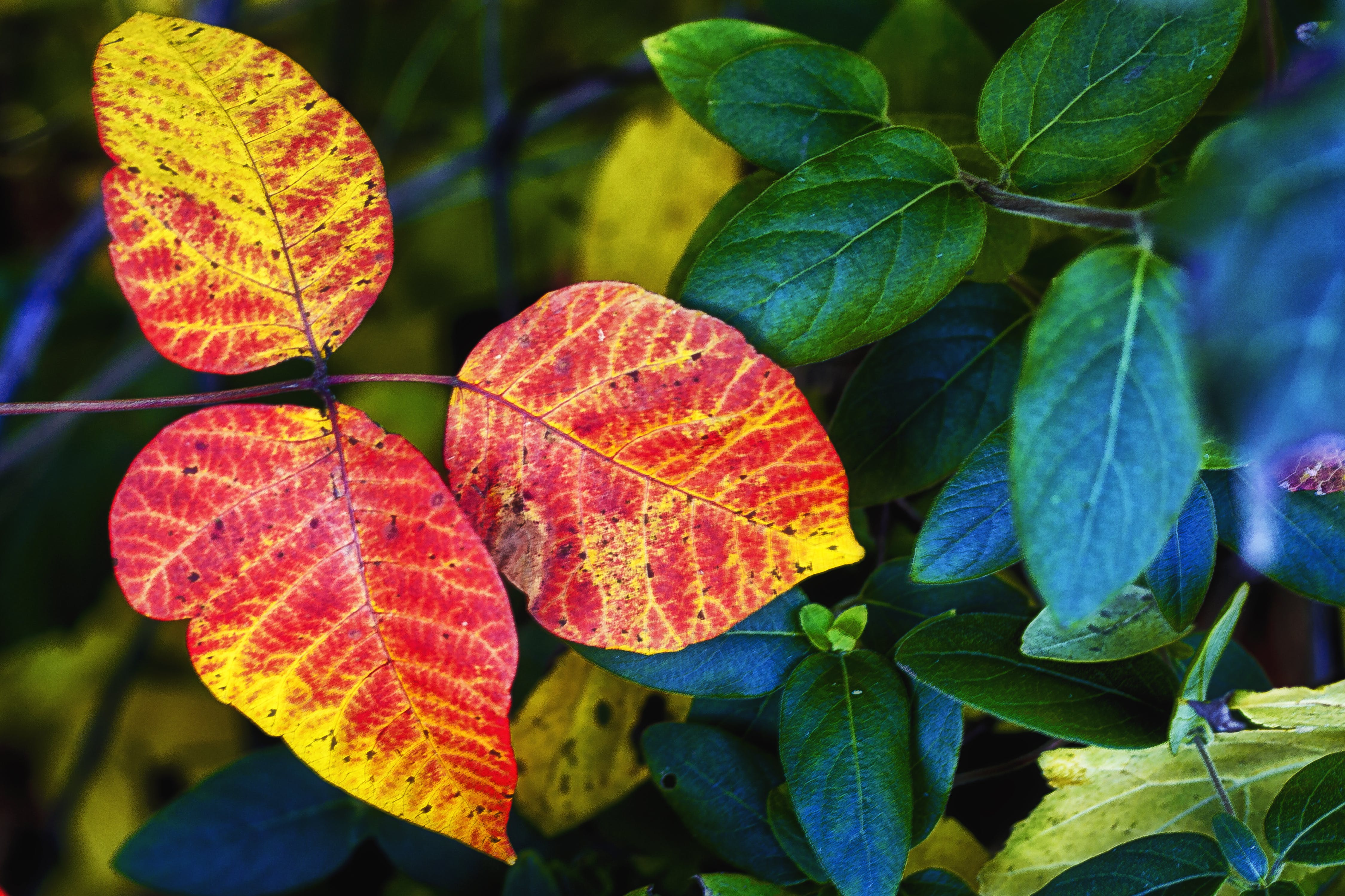 Free stock photo of autumn leaves, fall colors