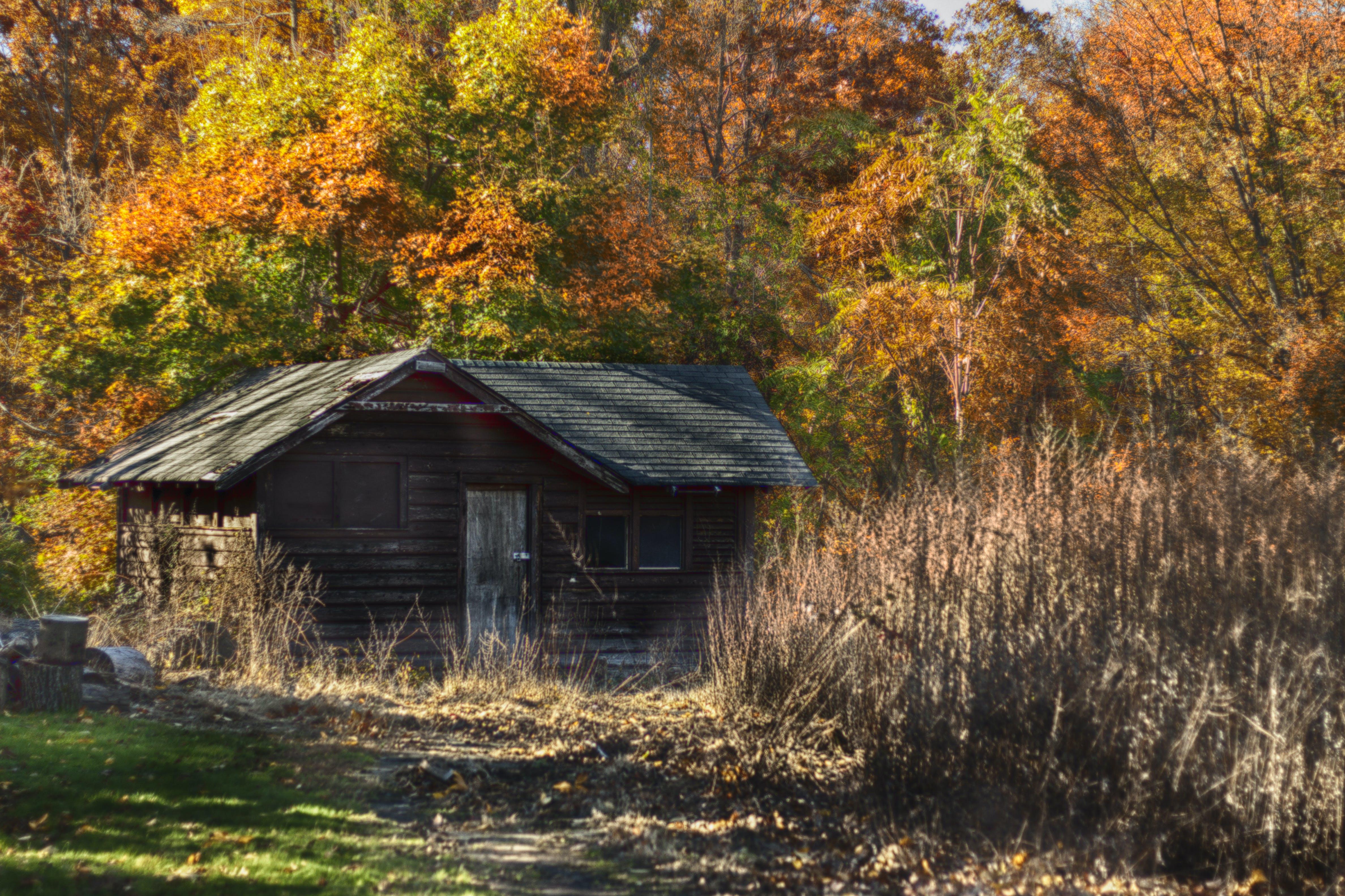 Foto profissional grátis de cores de outono, solidão