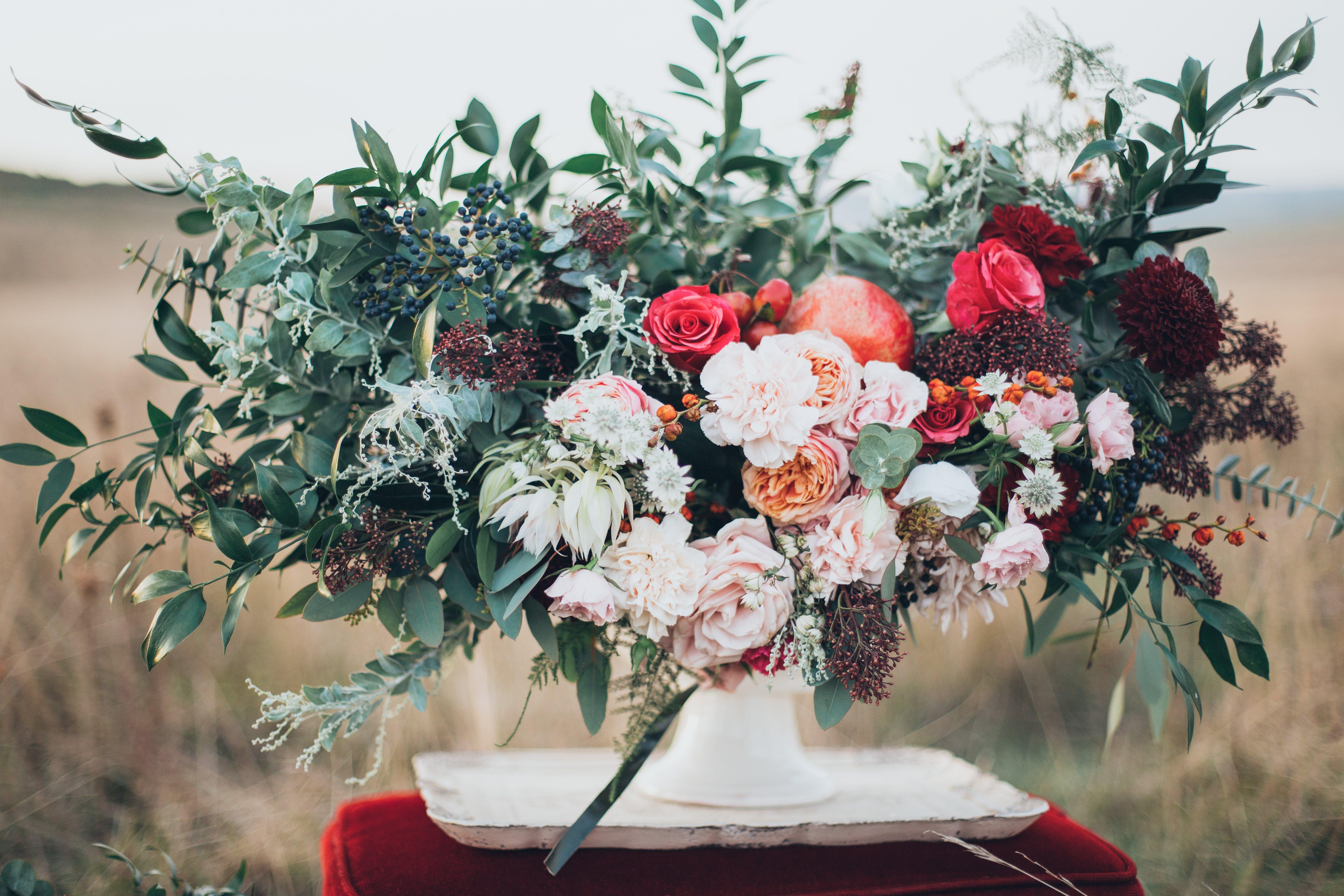 Foto profissional grátis de close, cores, flora, floração