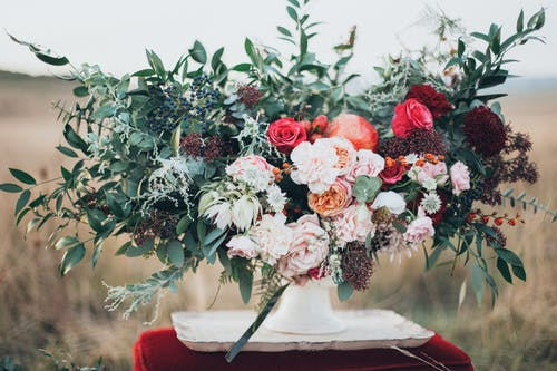 Kostnadsfri bild av blommor, blomning, dagsljus, färger