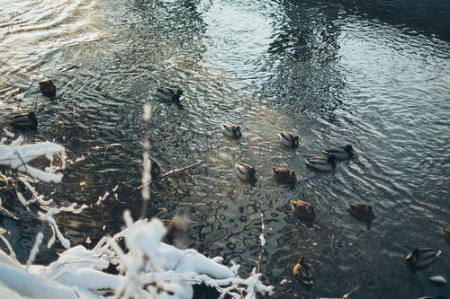 Photo of Ducks On Water
