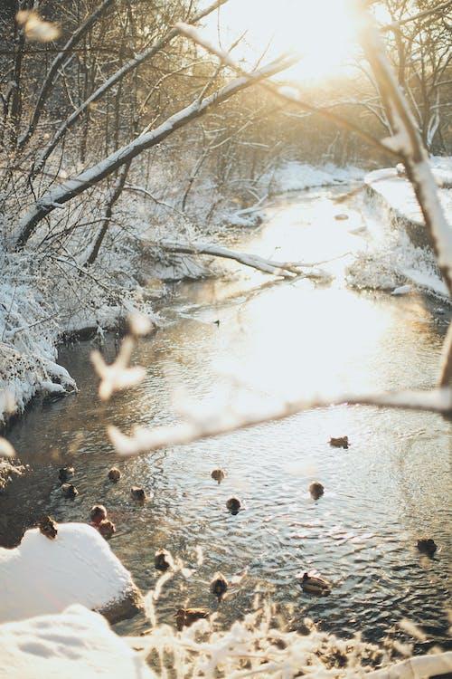 Immagine gratuita di freddo, gelo, inverno, natura