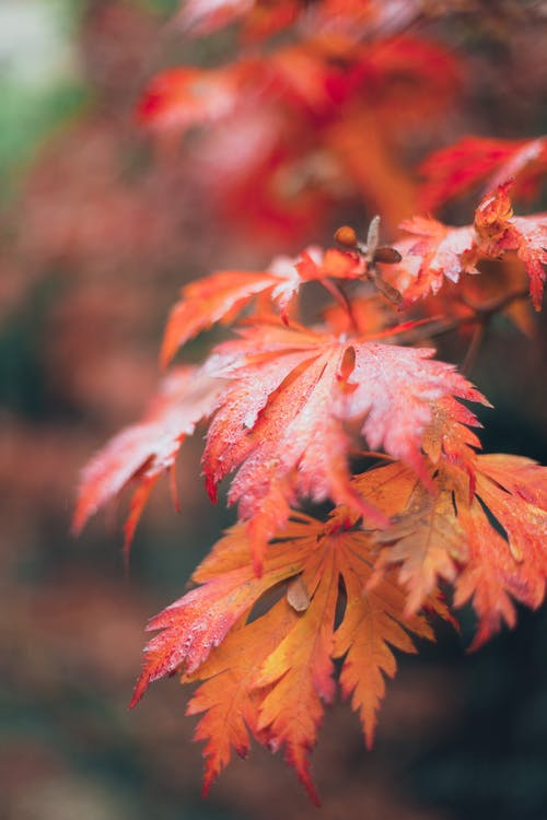 가을, 가지, 계절의 무료 스톡 사진