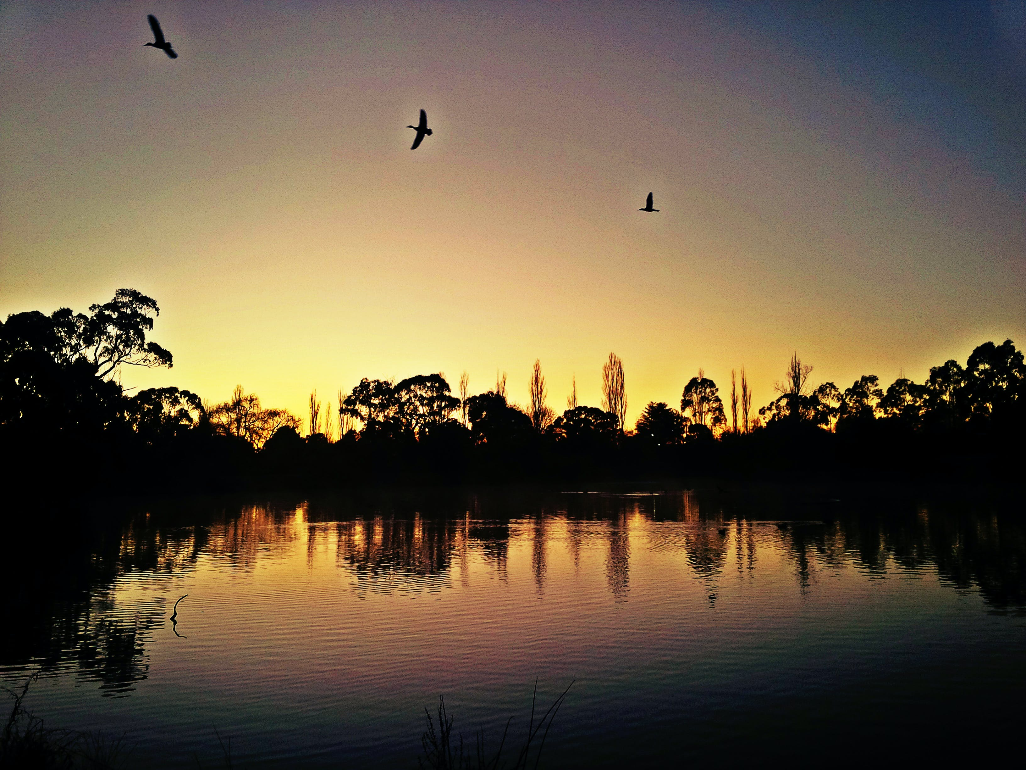 Free stock photo of ducks flying over dam in early morning light