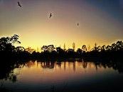 ducks flying over dam in early morning light
