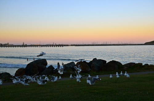 Free stock photo of sea, seagulls, sunset over jetty
