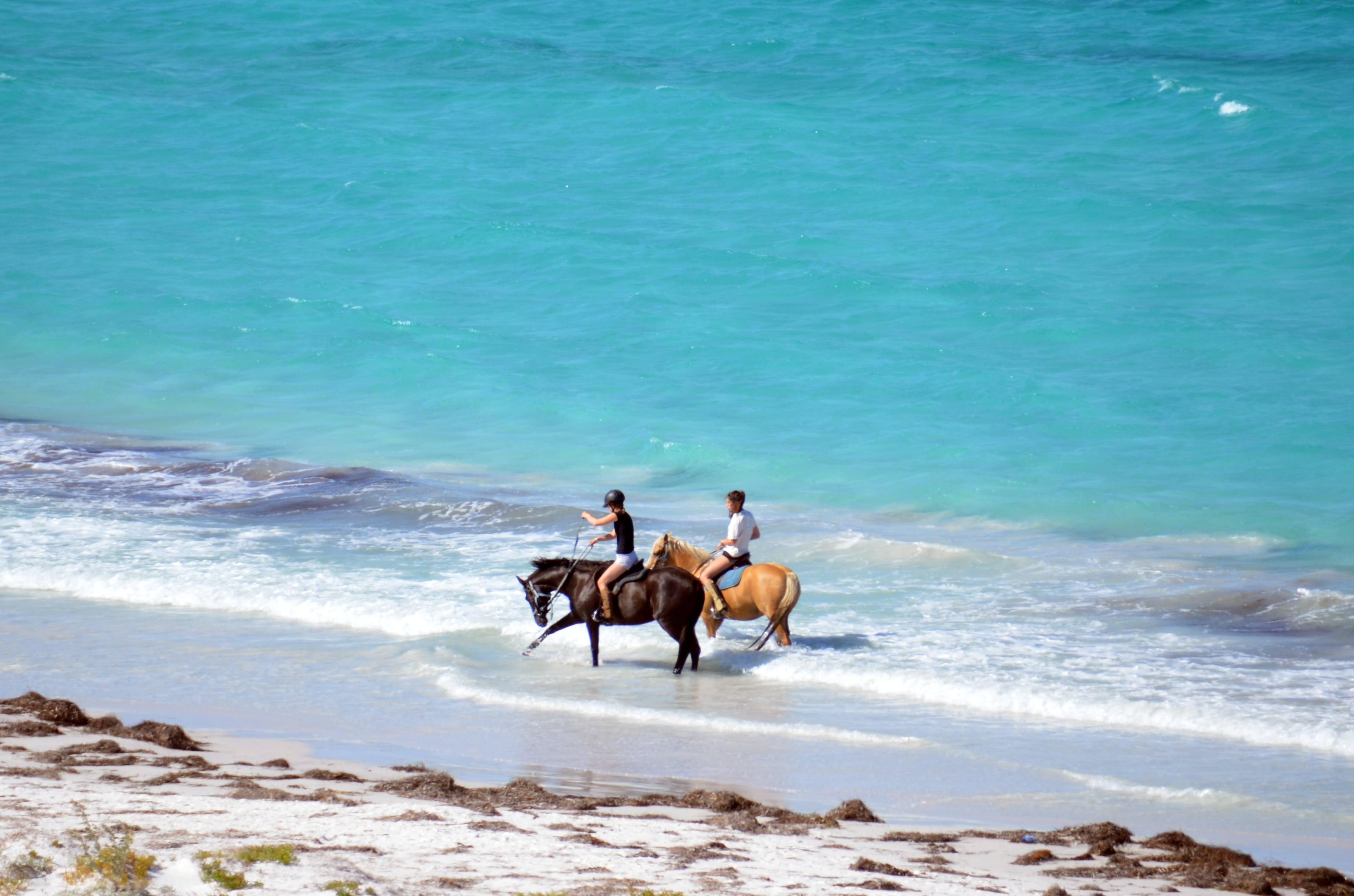 Free stock photo of summer fun, horses walking on beach