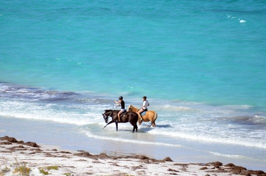 Free stock photo of summer fun, horses walking on beach