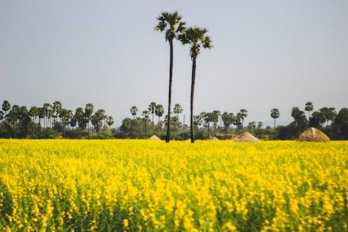 Fotos de stock gratuitas de amarillo, antecedentes, árbol, belleza