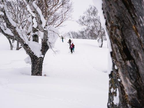 下雪的, 下雪的天氣, 假期, 冒險 的 免费素材照片