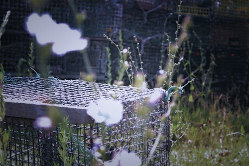 Free stock photo of flowers, light, lobster trap