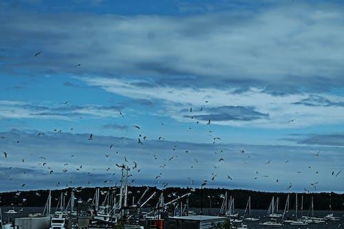 Free stock photo of boats, flock, new england