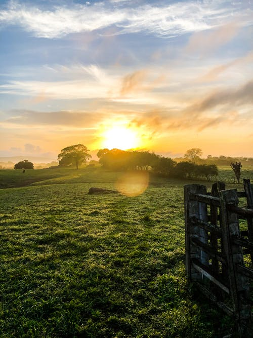 Бесплатное стоковое фото с восход, горизонт, деревья, закат