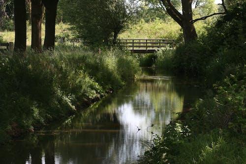 Základová fotografie zdarma na téma most, příroda
