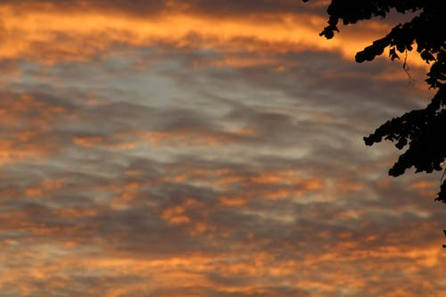 Základová fotografie zdarma na téma ranní sláva