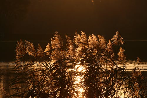 Základová fotografie zdarma na téma svítání