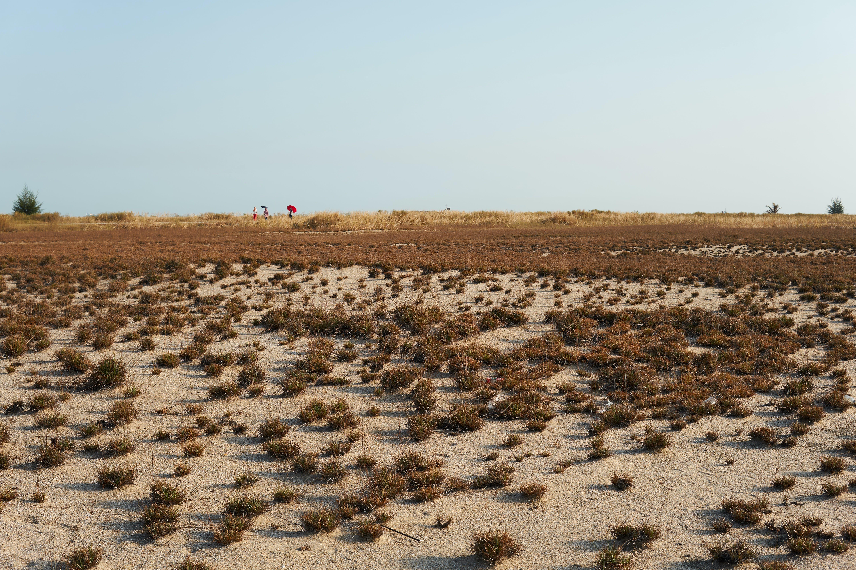 Kostenloses Stock Foto zu trocken, wüste