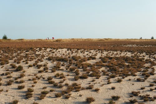 건조한, 사막의 무료 스톡 사진