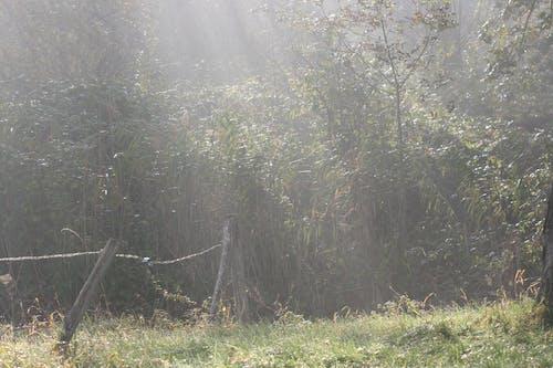 Základová fotografie zdarma na téma mlhavá krajina