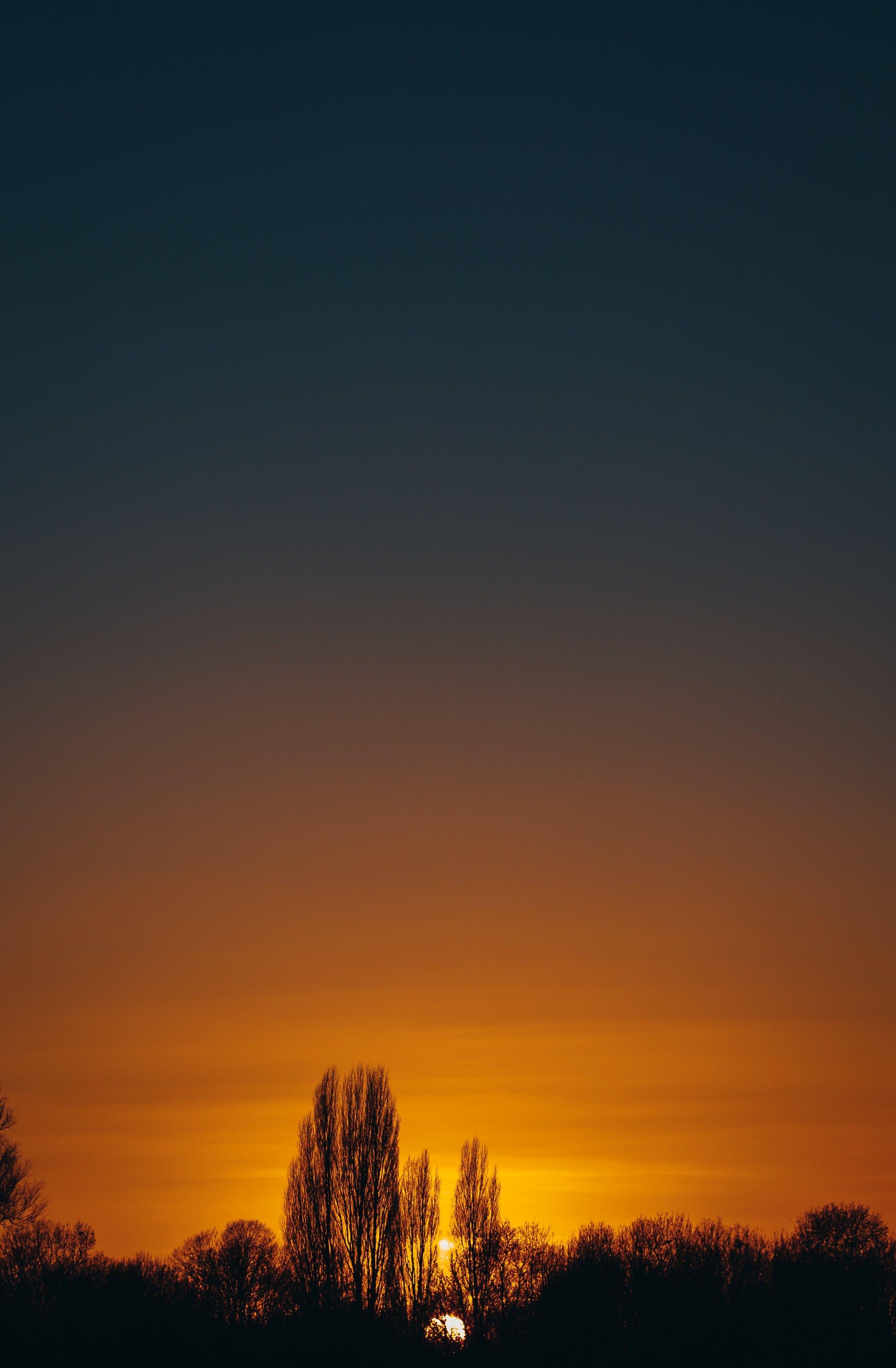 골든 아워, 나무, 새벽, 일몰의 무료 스톡 사진
