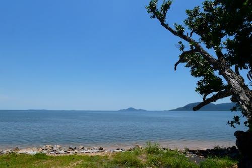 açık hava, ağaç, Avustralya, Mavi gökyüzü içeren Ücretsiz stok fotoğraf