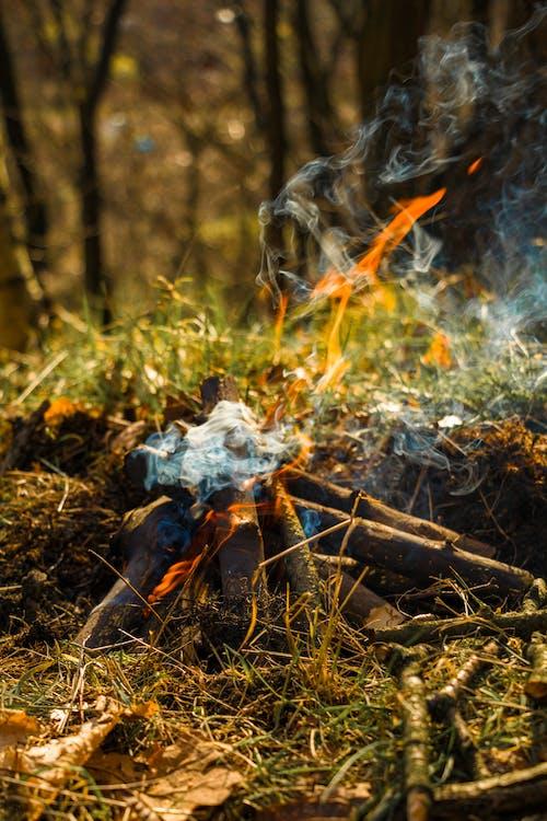 bål, brann, campe