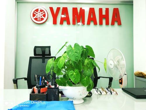 Free stock photo of motorcycle, yamaha