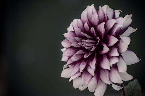Gratis stockfoto met blauwe bloem, bloemenveld, mooie bloem, mooie bloemen