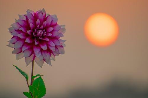 Ảnh lưu trữ miễn phí về bình Minh, hoa đẹp, lá xanh, mặt trời vàng