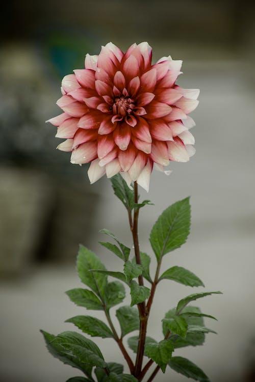 зелений лист, квітка, красиві квіти