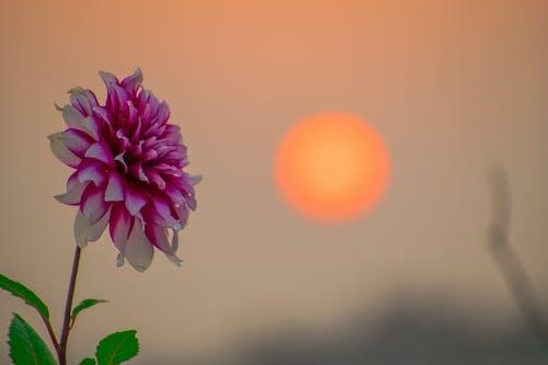 Gratis stockfoto met bloem, gouden zon, groen blad, zon