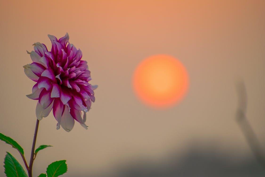 зелений лист, золоте сонце, квітка
