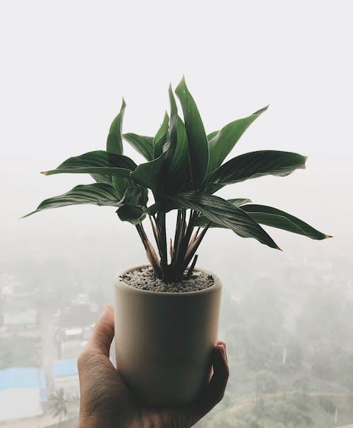 Gratis lagerfoto af busseronne, grøn, regn, rummet