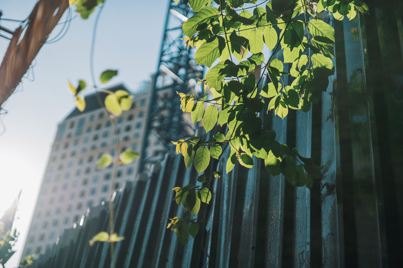 Бесплатное стоковое фото с HD-обои, глубина резкости, листва, обои 4k