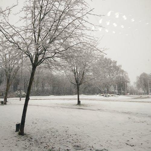 Ilmainen kuvapankkikuva tunnisteilla lumi, lumisade, talvi, valkoinen