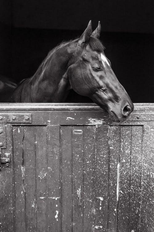Imagine de stoc gratuită din cal, Pexels, portret animal